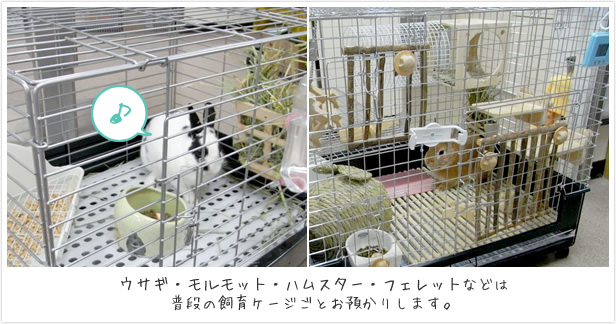 ウサギ・モルモット・ハムスター・フェレットなどは普段の飼育ゲージごとお預かりします