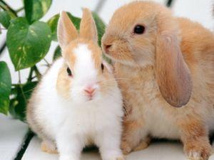 ウサギ飼育指導1