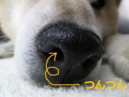寝ているレオちゃん3